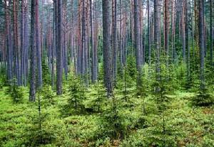 Miško vertė